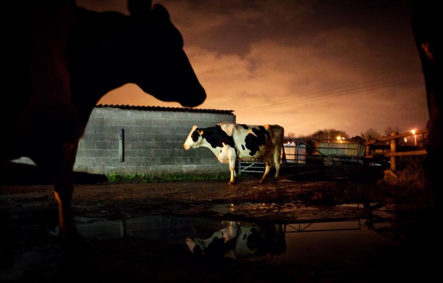 Producătorul lactatelor Napolact, afaceri în creștere cu 4% și revenire pe profit