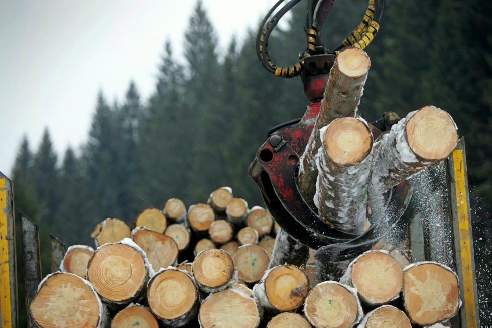 Procurorii de la Crimă Organizată asociază un mare nume din industria lemnului cu tăierile ilegale de păduri