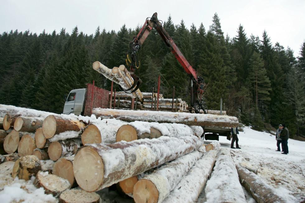 (Parteneriat) Cum vrea Uniunea Europeană să ne protejăm pădurile. Suntem pregătiți pentru asta?