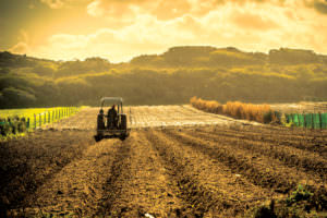 terenuri agricole_agricultura_getty_newmoney