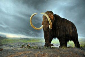 O nouă găselniță a Guvernului: cine va câștiga, de fapt, de pe urma fondului-mamut pe care vrea să-l înființeze statul