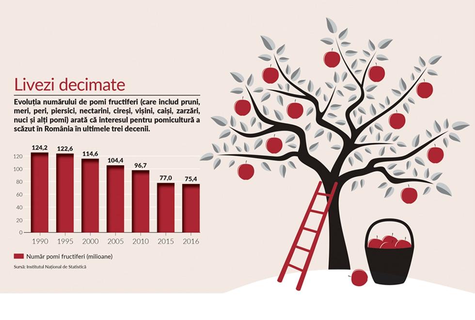 Fructe de sezon: cum au dispărut aproape 50 de milioane de pomi din livezile românești