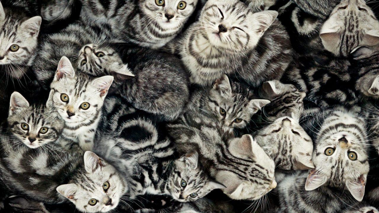 pisica este un bitcoin