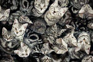 pisici getty newmoney