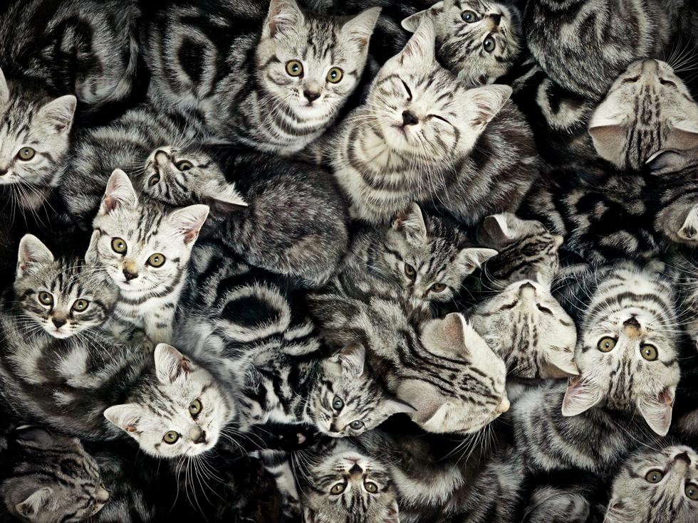 La vânătoare de pisici virtuale: cum s-a extins cea mai nouă obsesie a investitorilor în criptomonede