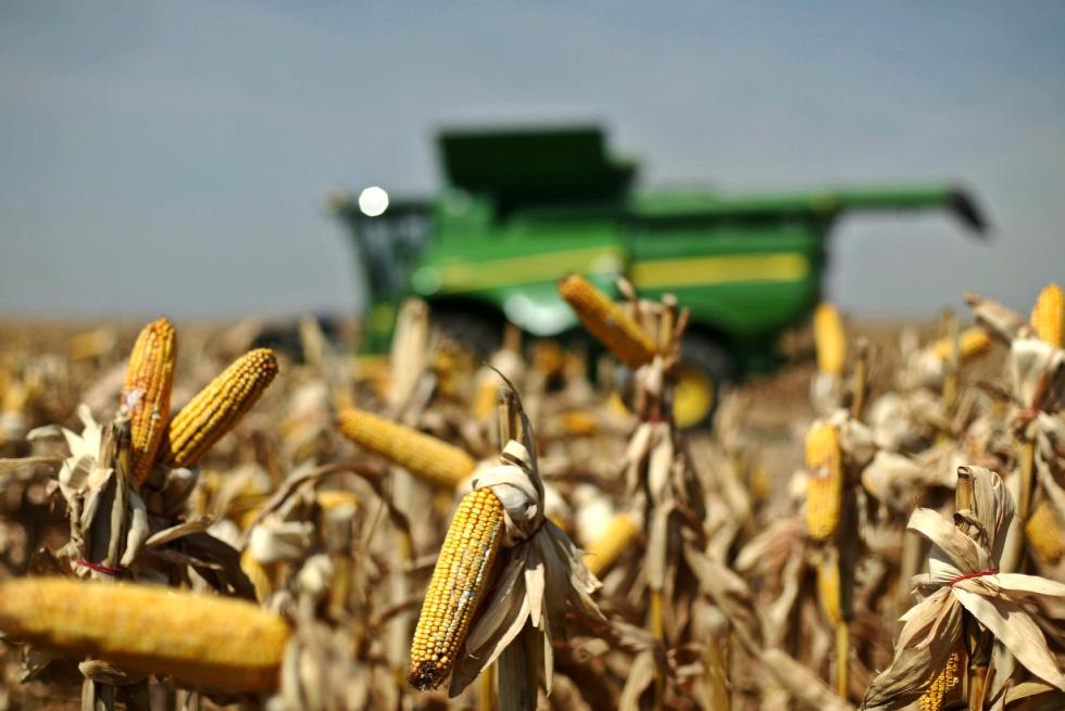 Producţia de cereale a României a crescut cu peste 12% în 2017, deși suprafața cultivată a scăzut