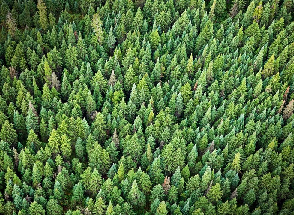 Ce se ascunde în spatele deciziei Schweighofer de a vinde pădurile din România