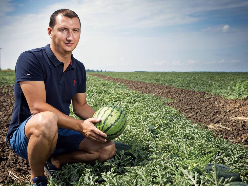 Povestea fermierilor din Ialomița care exportă sute de mii de pepeni din Cehia până în Dubai