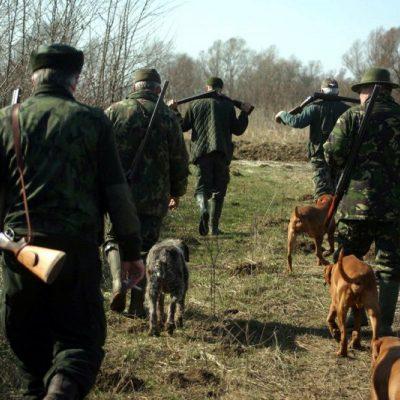 Mafia lemnului, lovită în plin. Guvernul înfiinţează Garda Forestieră Naţională